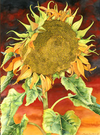 130 - Sunflower