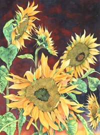 131 - Sunflowers