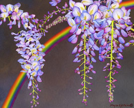 156 - Wisteria with Rainbow