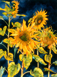176 - Sunflowers With Blue Sky
